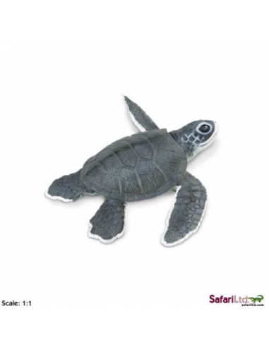 Mládě mořské želvy