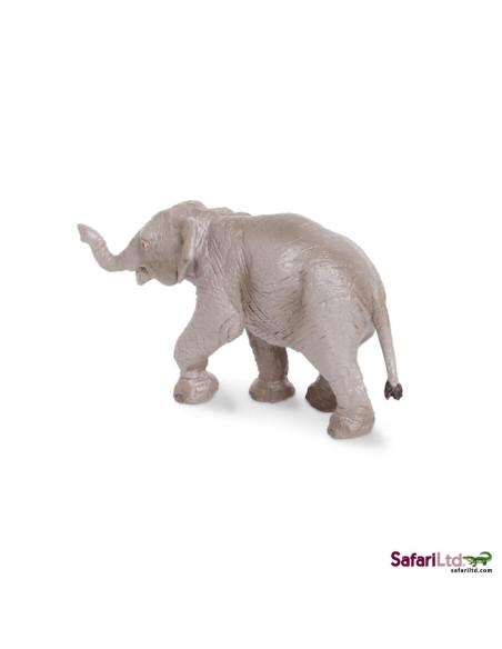 Mládě slona indického