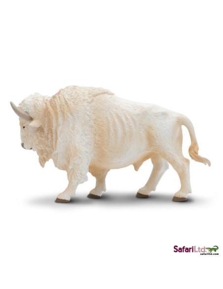 Bílý buvol domácí