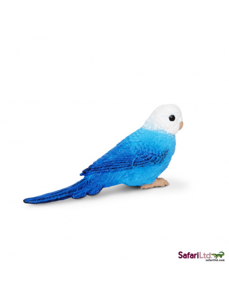 Andulka modrá