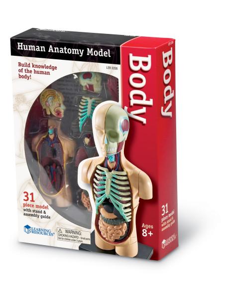 Anatomy Model - Human Body