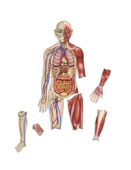 Oboustranné magnetické lidské tělo