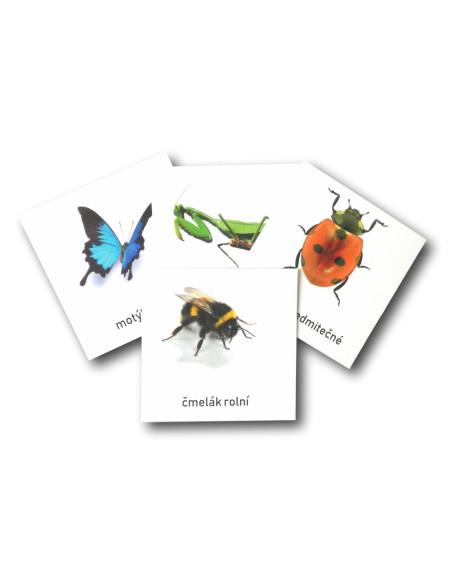 Třísložkové karty - Hmyz (ke stažení)