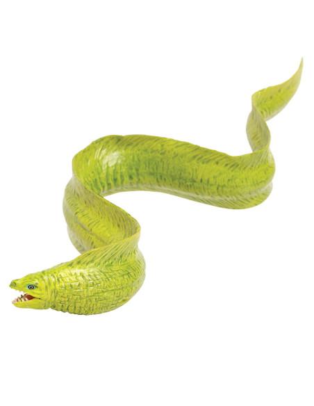Muréna zelená