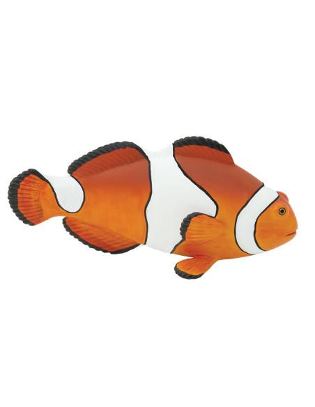 Clown Anemonefish