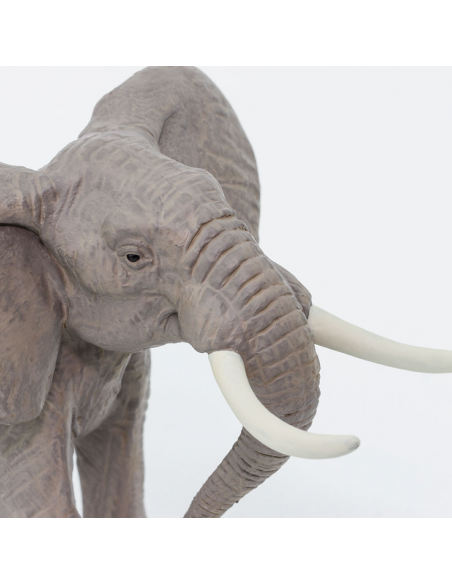 Samec slona afrického