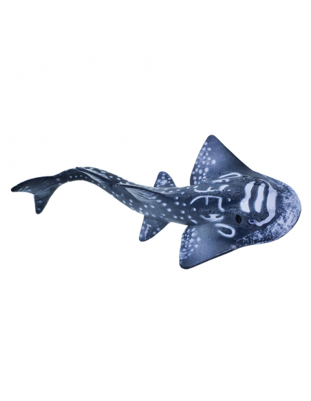 Shark Ray