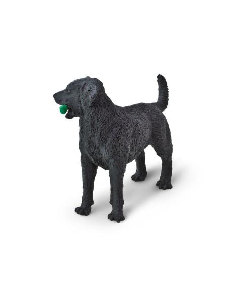 Černý labrador