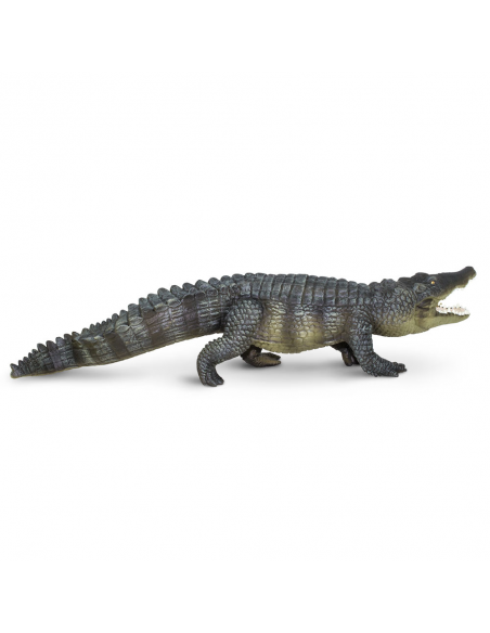 Salt-Water Crocodile