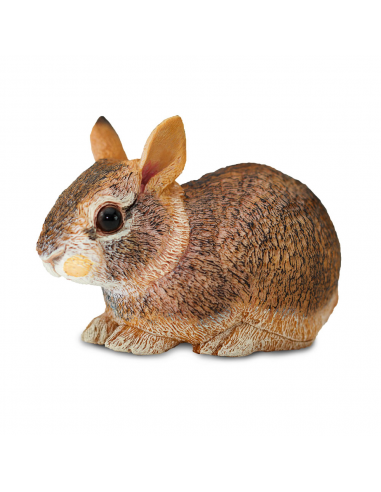 Eastern Cottontail Rabbit Baby